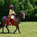 Te-paard-500x500